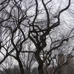 """Central Park Tree"" by NicoleChampion"