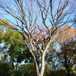 """Central Park Tree 2"" by NicoleChampion"
