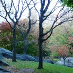 """Central Park Tree 3"" by NicoleChampion"