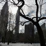 """NYC Tree"" by NicoleChampion"