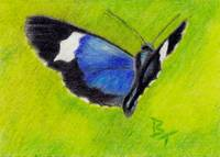 On the Wings aceo