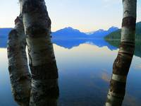 Far Away Through The Aspen - Lake McDonald