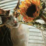 """Still Life with Sunflower and Cat"" by Maggie_Stiefvater"