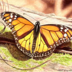"""Monarch #2"" by denisejhowardart"