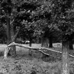 """Broken Tree"" by codefreespirit"
