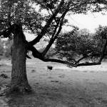 """Strange Tree"" by codefreespirit"
