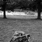 """The Stump"" by codefreespirit"