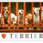 """""""I Love Terriers Poster"""" by Maggie_Stiefvater"""