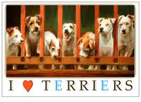I Love Terriers Poster