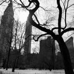 """NYC Tree BW"" by NicoleChampion"