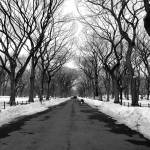 """Central Park Perspective BW"" by NicoleChampion"