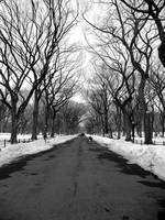 Central Park Perspective BW