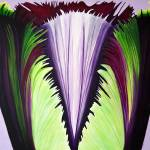 """Large Purple Fringed Tulip"" by StudioEriksdotter"
