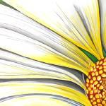 """""""Sunny Daisy"""" by StudioEriksdotter"""