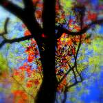 """Secrets of Fall"" by artofbeing"
