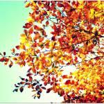 """Golden Autumn"" by anneshka"