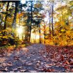 """""""Fall into the Autumn Woods"""" by anneshka"""