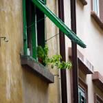 """""""Window Sill Plant"""" by raetucker"""