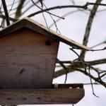 """Winter Birdhouse"" by raetucker"