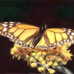 """Monarch #3"" by denisejhowardart"