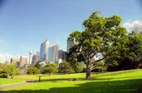 Sydney Skyline and park view