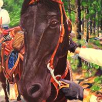 Rocky Mountain Horse and Rider