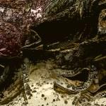 """Kraken"" by LawrenceGuy"