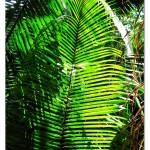 """Central American Jungle"" by jbjoani2"