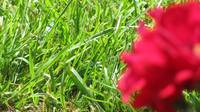 Red Flower/Green Grass