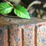 """""""Leafy Brick"""" by brandislate"""
