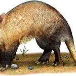"""""""Aardvark"""" by inkart"""