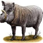 """""""Warthog"""" by inkart"""