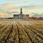 """mount timpanogos temple rows snowy april evening p"" by houstonryan"