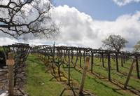 The Vinyard II