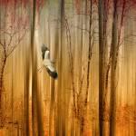 """Fantasy Flight"" by JessicaJenney"