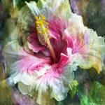 """""""Hibiscus d"""