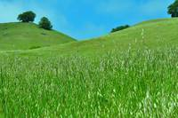 Green Hills of Spring