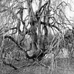 """Twisted Tree"" by hess"