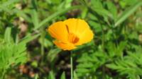 Yellow-orange flower
