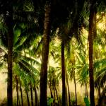 """Tropical Paradise Fine Art"" by lightningman"