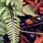 """Feathering Fern"" by adifferenteyephotography"