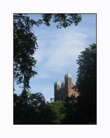 Yale Towers in the Trees