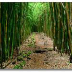 """Bamboo Path"" by mbmarconi"