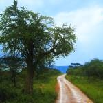 """Rural African Road"" by kylelincoln"