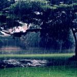 """Uganda Rain"" by kylelincoln"