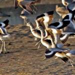 """flying beach birds"" by artfilmusic"