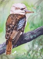 Kookaburra Queen