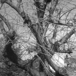 """Black and White Bare Tree"" by Berry-good-photos"