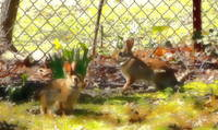 march 044__0 5 water color rabbits