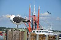 Seagull at the Docks